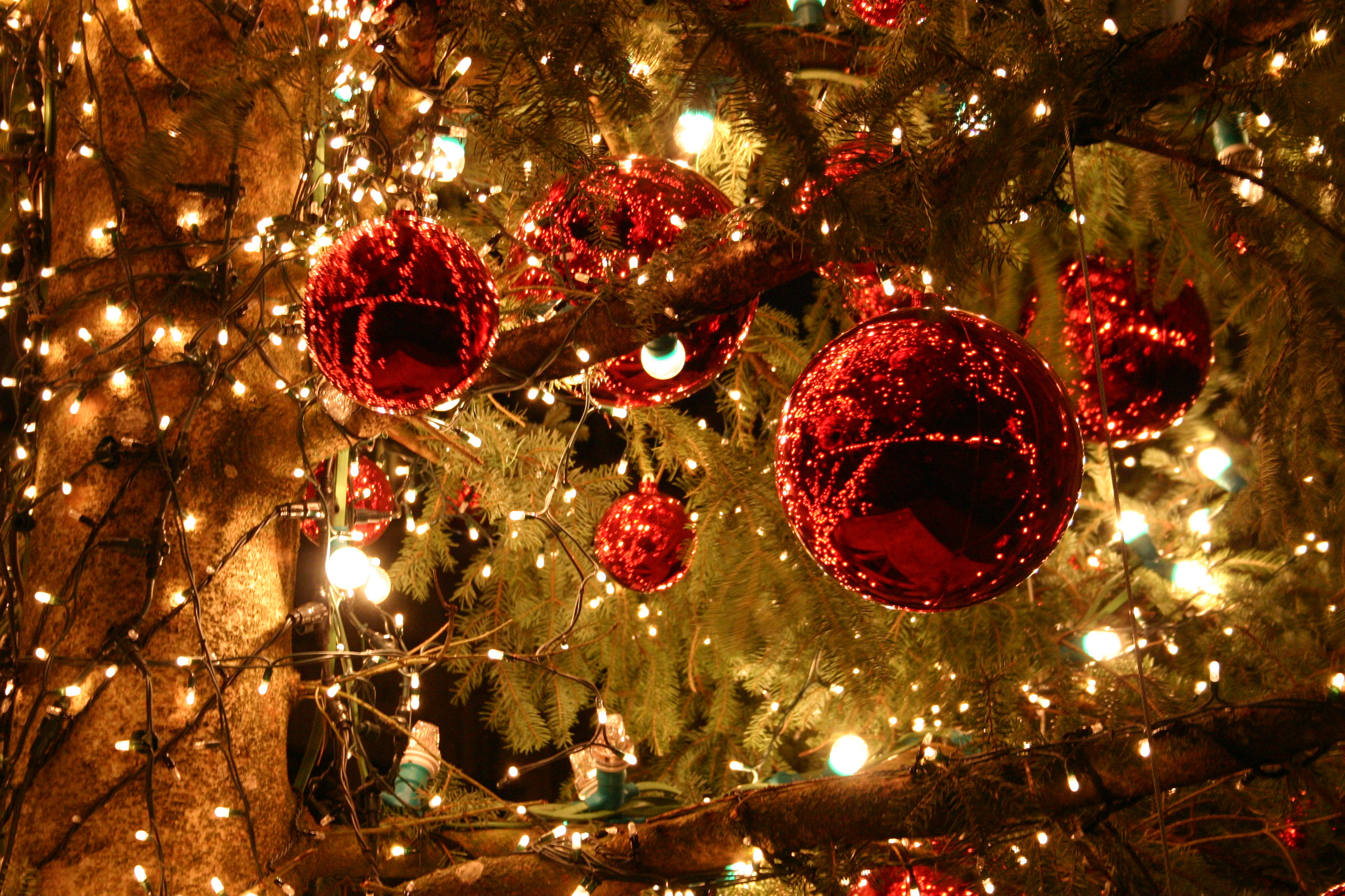 Images Of Merry Christmas.Merry Christmas Thethirdbar Net