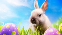 easter-bunny-background-high-definition-wallpaper